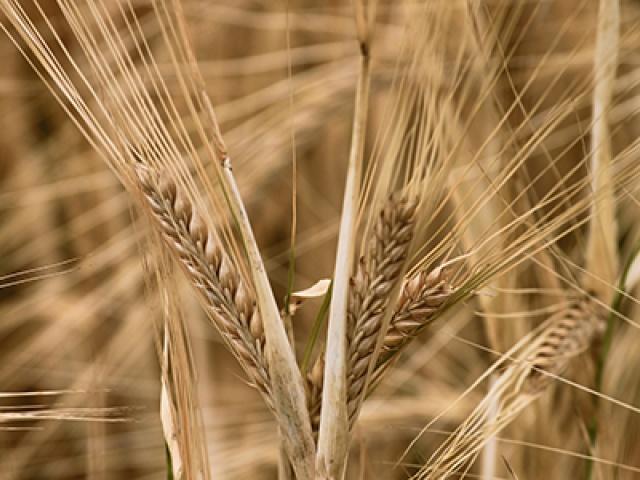 Rohstoffe- die Grundlage für gutes Biofutter
